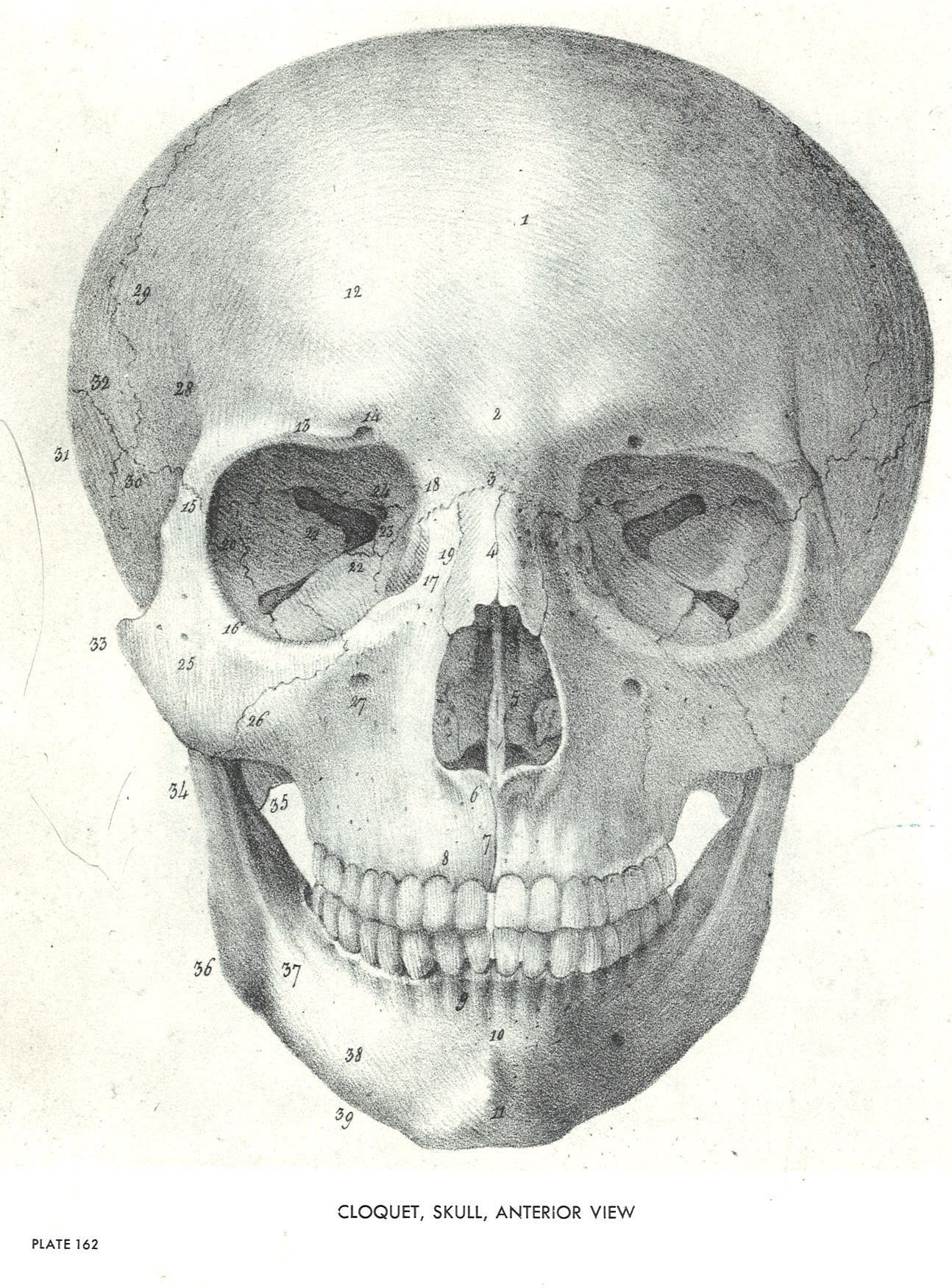 Anatomy | SVA Library Picture & Periodicals Collections
