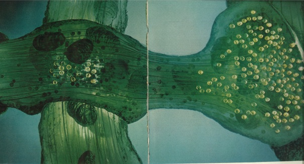 "At the Synapse, a sudden chemical invasion. Life Oct. 22, 1971. ""This painting, which is based on the actual specimen..."" depicts how a signal gets from one neuron to another. ""Here an axon (the big horizontal shape) forms two synapses, the first with a dendrite offshoot (vertical trunk on the left) and the other with the dendrite itself (right)."""