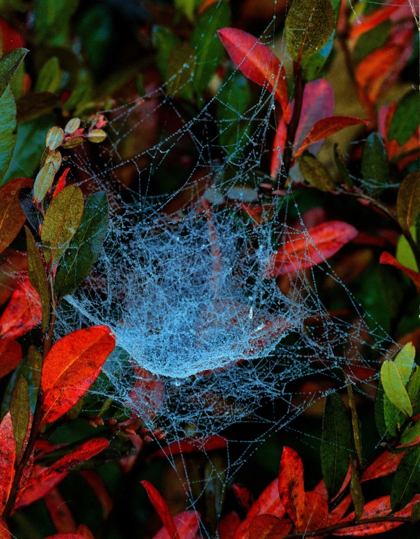 The web of a bowl and doily spider. Our First Spider Picture is Spiderless.